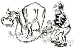 Корова привязанная коровьим узлом